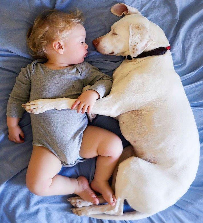 fotoalbum, děti a psi, pes a dítě, dítě se psem, novorozenec, pes, fotky, obrázky, příběhy, diskuze 8a
