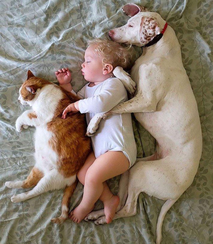 fotoalbum, děti a psi, pes a dítě, dítě se psem, novorozenec, pes, fotky, obrázky, příběhy, diskuze 9