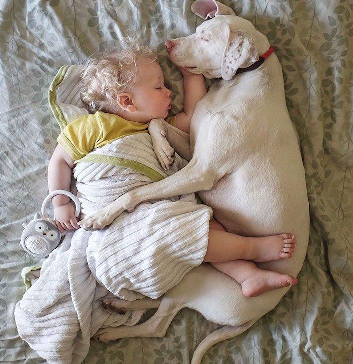 fotoalbum, děti a psi, pes a dítě, dítě se psem, novorozenec, pes, fotky, obrázky, příběhy, diskuze 11