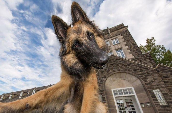 selfie, pes, psa psi, psi, obrázky, psů, fotky, fotografie, fotoalbum 2