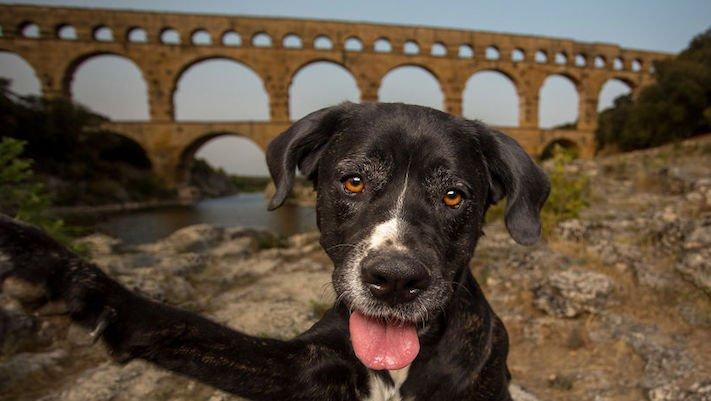 selfie, pes, psa psi, psi, obrázky, psů, fotky, fotografie, fotoalbum 4