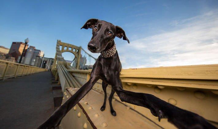 selfie, pes, psa psi, psi, obrázky, psů, fotky, fotografie, fotoalbum 5