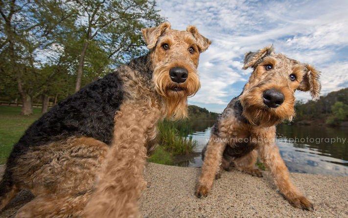 selfie, pes, psa psi, psi, obrázky, psů, fotky, fotografie, fotoalbum 6