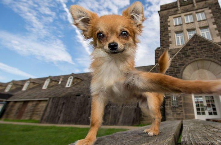selfie, pes, psa psi, psi, obrázky, psů, fotky, fotografie, fotoalbum 9