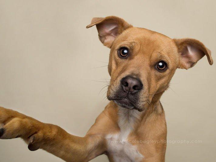 selfie, pes, psa psi, psi, obrázky, psů, fotky, fotografie, fotoalbum 10
