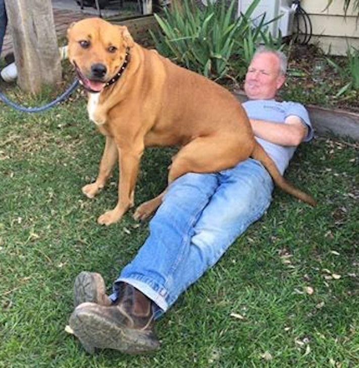 pes, strká, dává, zadek, pozadí, do obličeje, směrem, ke mně, k majiteli, majiteli, majitel, problémy, se psem, výcvik, výchova, psa 3