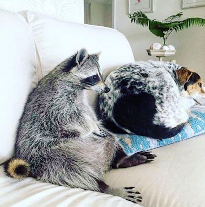 pes, strká, dává, zadek, pozadí, do obličeje, směrem, ke mně, k majiteli, majiteli, majitel, problémy, se psem, výcvik, výchova, psa 4