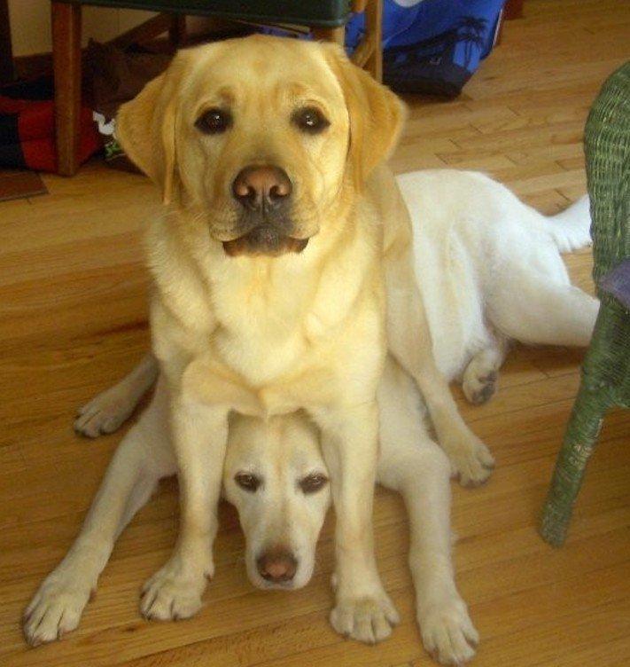 pes, strká, dává, zadek, pozadí, do obličeje, směrem, ke mně, k majiteli, majiteli, majitel, problémy, se psem, výcvik, výchova, psa 8