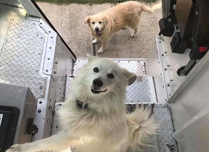 pes a pošťák, psi, pošťáci, láska, psí příběhy, příběh, psa, obrázky, fotoalbum, psi, versus, vs, pošťáci, pes vs. pošťák 2