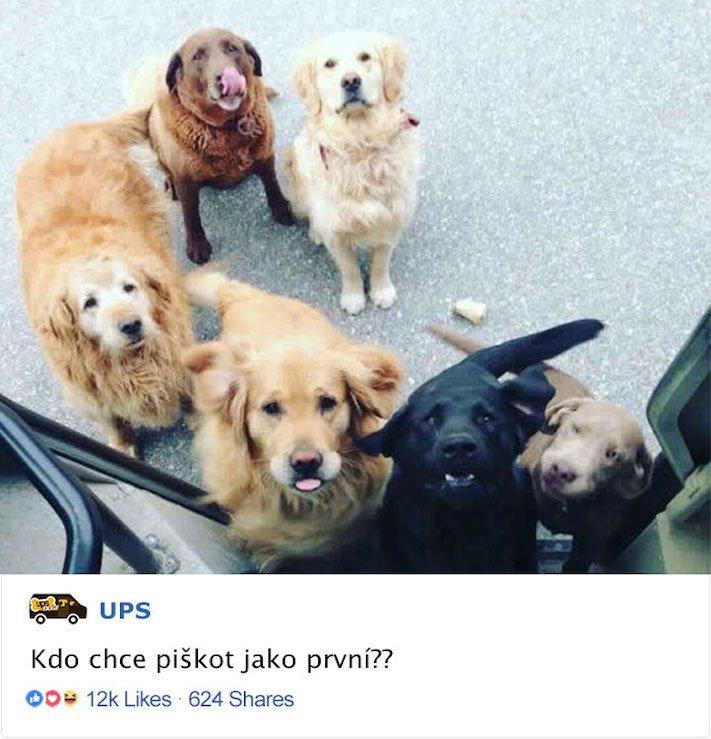 pes a pošťák, psi, pošťáci, láska, psí příběhy, příběh, psa, obrázky, fotoalbum, psi, versus, vs, pošťáci, pes vs. pošťák 2a