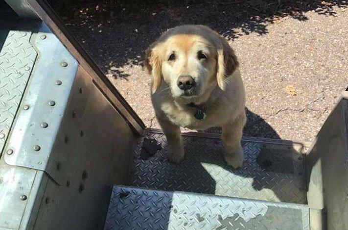 pes a pošťák, psi, pošťáci, láska, psí příběhy, příběh, psa, obrázky, fotoalbum, psi, versus, vs, pošťáci, pes vs. pošťák 3