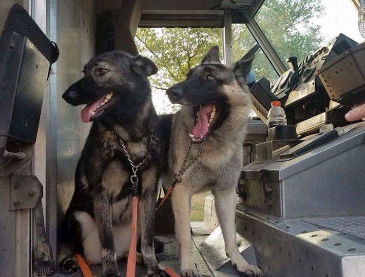 pes a pošťák, psi, pošťáci, láska, psí příběhy, příběh, psa, obrázky, fotoalbum, psi, versus, vs, pošťáci, pes vs. pošťák 3a