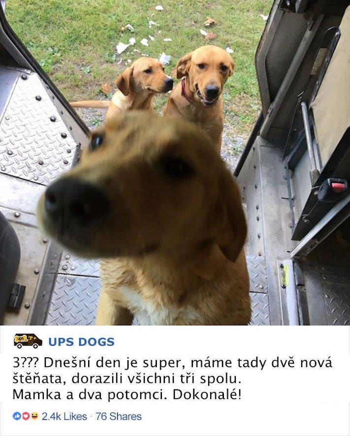 pes a pošťák, psi, pošťáci, láska, psí příběhy, příběh, psa, obrázky, fotoalbum, psi, versus, vs, pošťáci, pes vs. pošťák 3b
