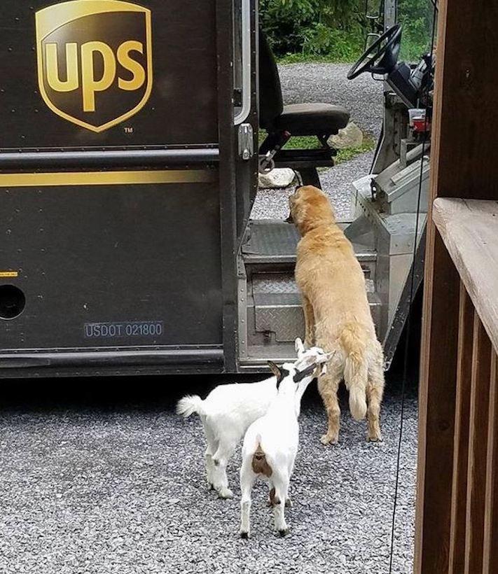 pes a pošťák, psi, pošťáci, láska, psí příběhy, příběh, psa, obrázky, fotoalbum, psi, versus, vs, pošťáci, pes vs. pošťák 5
