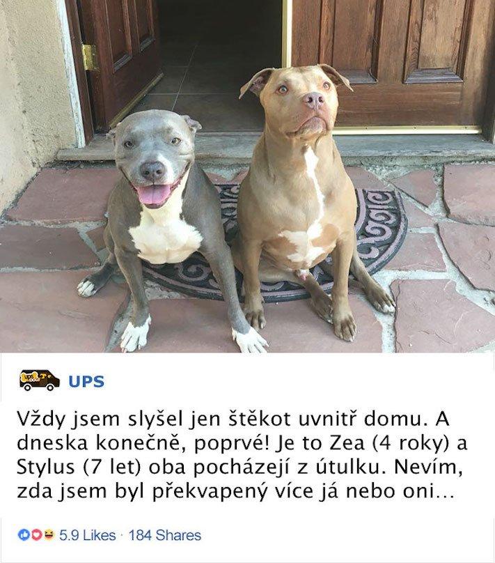 pes a pošťák, psi, pošťáci, láska, psí příběhy, příběh, psa, obrázky, fotoalbum, psi, versus, vs, pošťáci, pes vs. pošťák 8