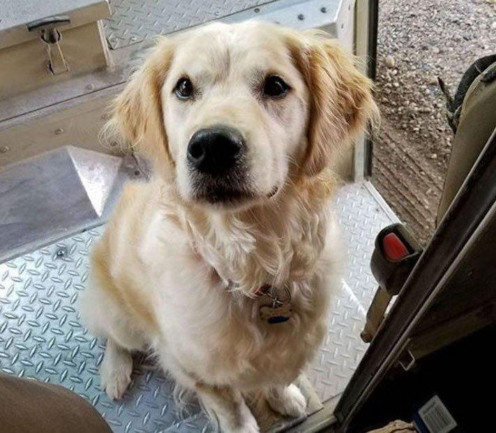 pes a pošťák, psi, pošťáci, láska, psí příběhy, příběh, psa, obrázky, fotoalbum, psi, versus, vs, pošťáci, pes vs. pošťák 10