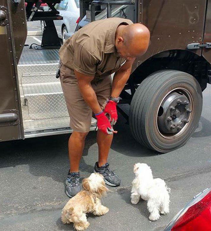 pes a pošťák, psi, pošťáci, láska, psí příběhy, příběh, psa, obrázky, fotoalbum, psi, versus, vs, pošťáci, pes vs. pošťák 12