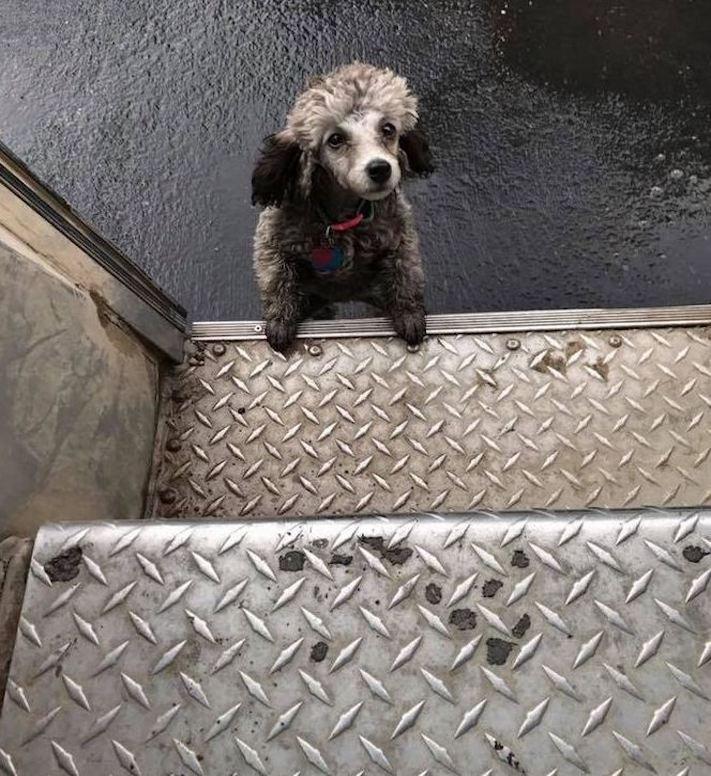 pes a pošťák, psi, pošťáci, láska, psí příběhy, příběh, psa, obrázky, fotoalbum, psi, versus, vs, pošťáci, pes vs. pošťák 13