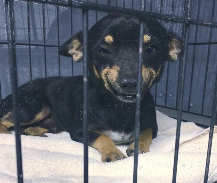 psí úsměv, psí, úsměv, obrázky, fotoalbum, fotky, nejlepší, fotografie, psa, psi, psy, pes, z útulku, policie 1