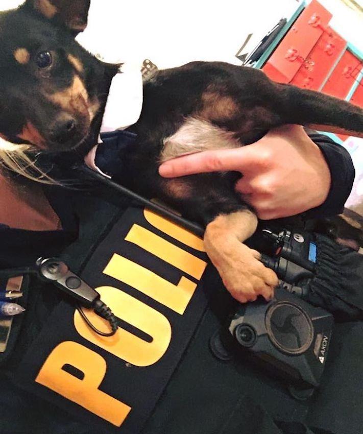 psí úsměv, psí, úsměv, obrázky, fotoalbum, fotky, nejlepší, fotografie, psa, psi, psy, pes, z útulku, policie 4