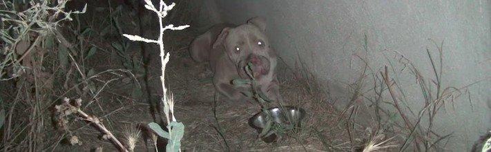 záchrana psa, záchranná, akce, záchrana, psi, psa, psů, psy, psí, příběhy, příběhy psů, psí příběhy 2