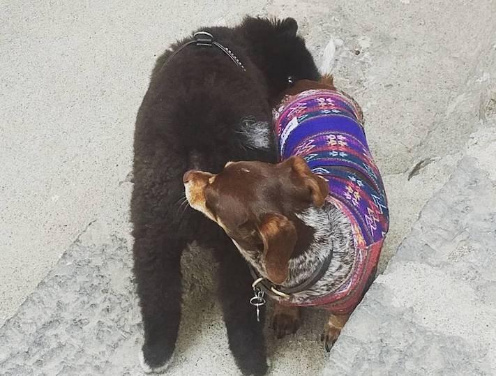 proč si psi čichají k zadku, pes, očichávání, čich, čichání, k zadku, zadek, výkaly, zahrabávání, fotky 1