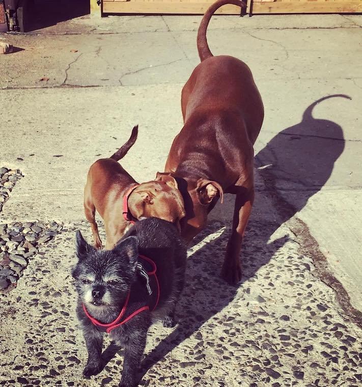 proč si psi čichají k zadku, pes, očichávání, čich, čichání, k zadku, zadek, výkaly, zahrabávání, fotky 2