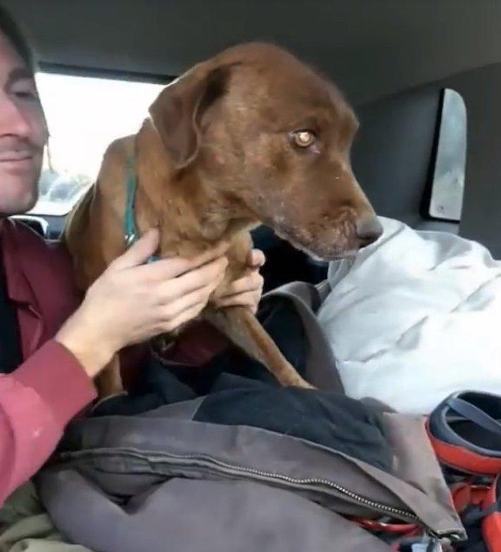 uvězněný pes, pes ve štole, záchrana, psa, psi, psů, psy, psí příběhy, video, záchranné akce, psů 43
