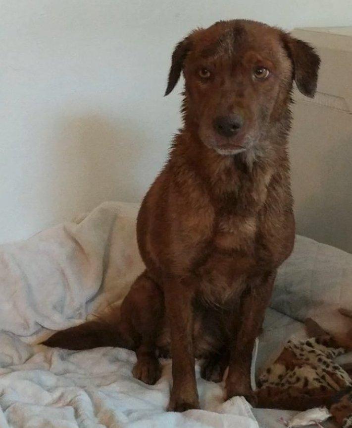 uvězněný pes, pes ve štole, záchrana, psa, psi, psů, psy, psí příběhy, video, záchranné akce, psů 5