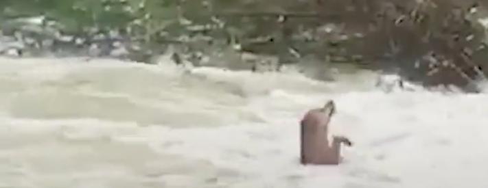záchrana psa, z vody, peřeje, topící pes, pes, se topí, ve vodě, peřeje, video 1