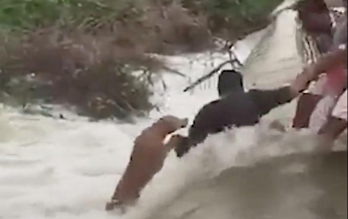 záchrana psa, z vody, peřeje, topící pes, pes, se topí, ve vodě, peřeje, video 3