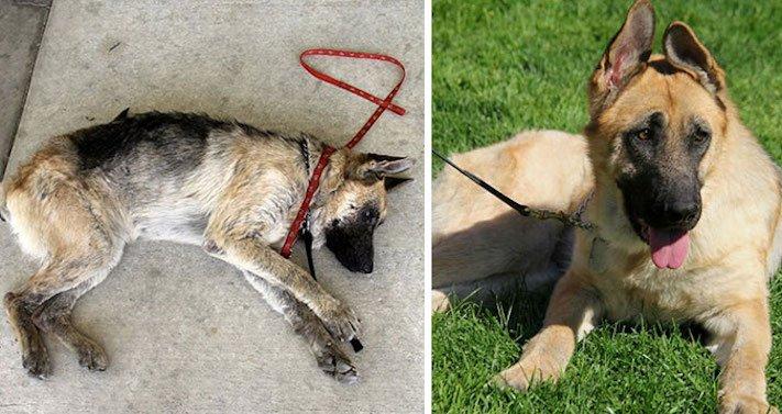 proměny, zachráněných, psů, adopce má smysl, nekupujadoptuj, nekupuj, adoptuj, záchránění, psi, psí příběhy, příběhy o psech, fotografie, obrázky, fotky, video, videa, psů, pes 2