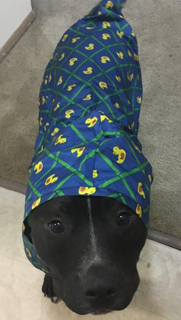 fóbie z deště, pes, se bojí, deště, déšť, pláštěnka, pro psa, oblečky, psí příběh, příběh psa, příběhy se psy, psí příběhy 2