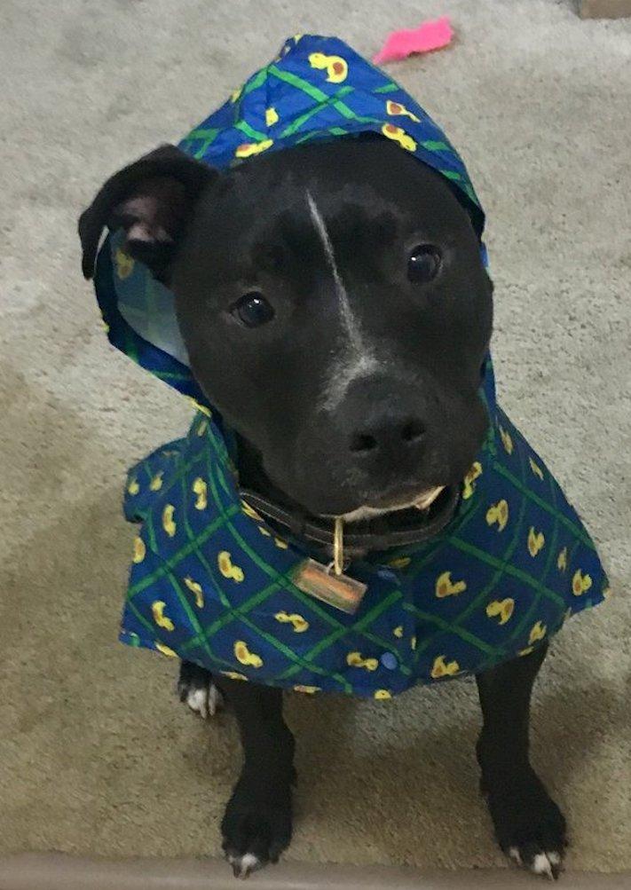 fóbie z deště, pes, se bojí, deště, déšť, pláštěnka, pro psa, oblečky, psí příběh, příběh psa, příběhy se psy, psí příběhy 3