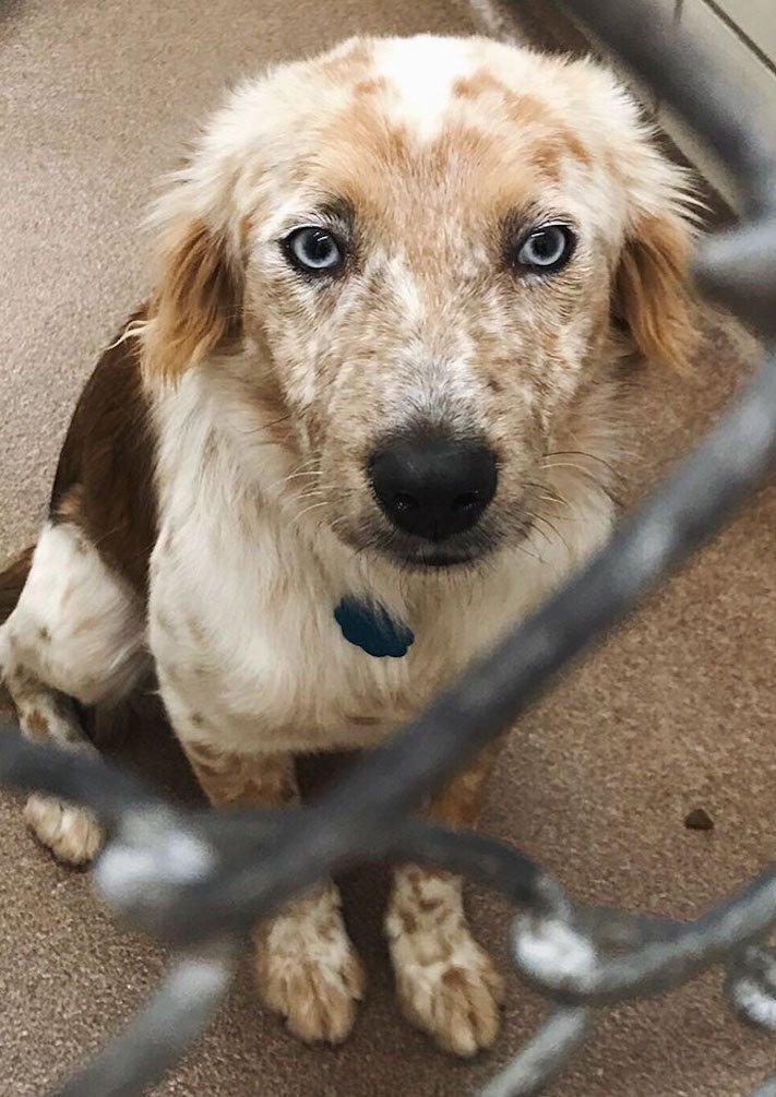 adopce psa, narozeniny, dárek, pořízení psa, útulky, psí příběhy, příběh psa, psí příběh, příběhy, psů, psi, psy, psa, pes 2