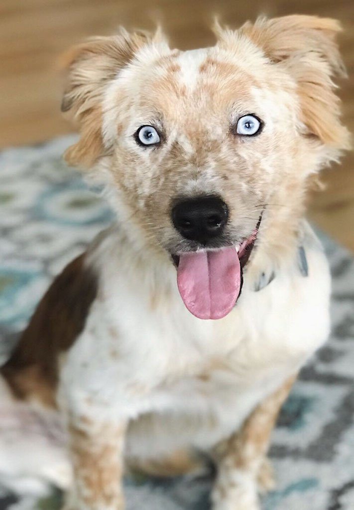 adopce psa, narozeniny, dárek, pořízení psa, útulky, psí příběhy, příběh psa, psí příběh, příběhy, psů, psi, psy, psa, pes 3