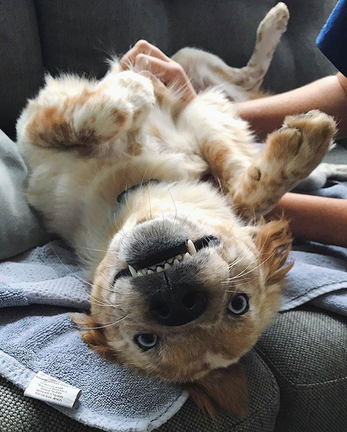 adopce psa, narozeniny, dárek, pořízení psa, útulky, psí příběhy, příběh psa, psí příběh, příběhy, psů, psi, psy, psa, pes 4