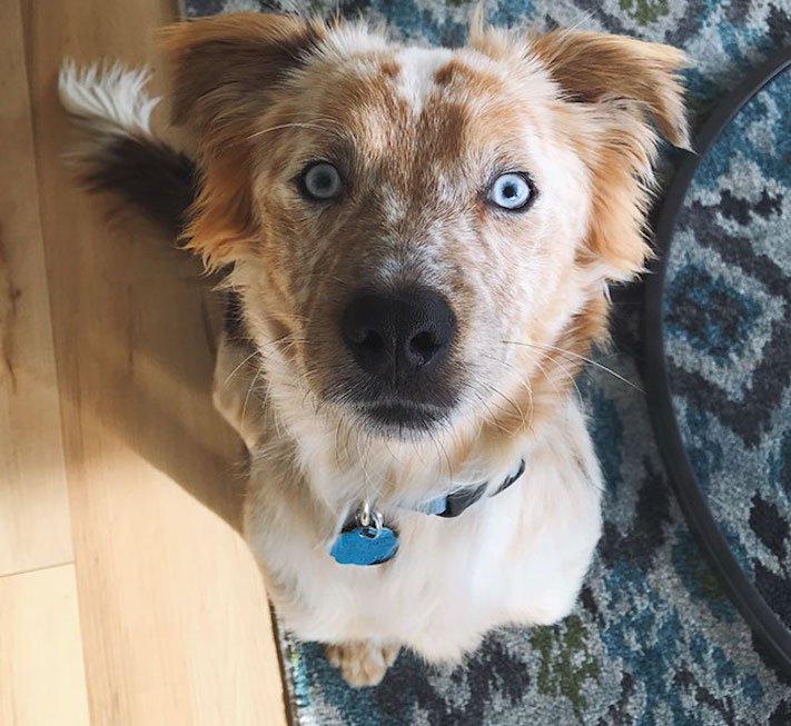 adopce psa, narozeniny, dárek, pořízení psa, útulky, psí příběhy, příběh psa, psí příběh, příběhy, psů, psi, psy, psa, pes 5
