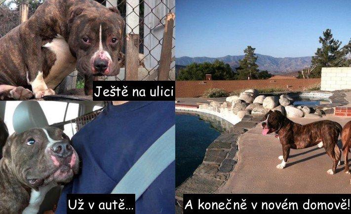 pouliční, pitbul, pes, záchrana, záchranná akce, psa, video, obrázky, záchrany psů, pomoc, psům, psí příběh, psí příběh, příběh, psa, psů, psi, psy 2
