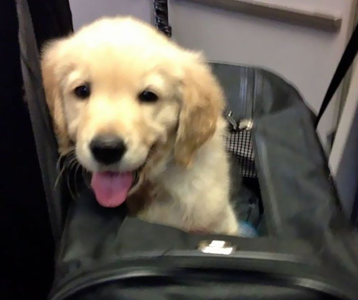 pes, v letadle, letadlo, pes, do letadla, cestování, se psem, zvířata, v letadle, cestovní společnosti, obrázky, psů 2