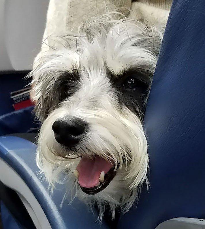 pes, v letadle, letadlo, pes, do letadla, cestování, se psem, zvířata, v letadle, cestovní společnosti, obrázky, psů 6