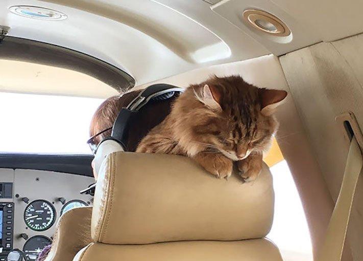 pes, v letadle, letadlo, pes, do letadla, cestování, se psem, zvířata, v letadle, cestovní společnosti, obrázky, psů 12