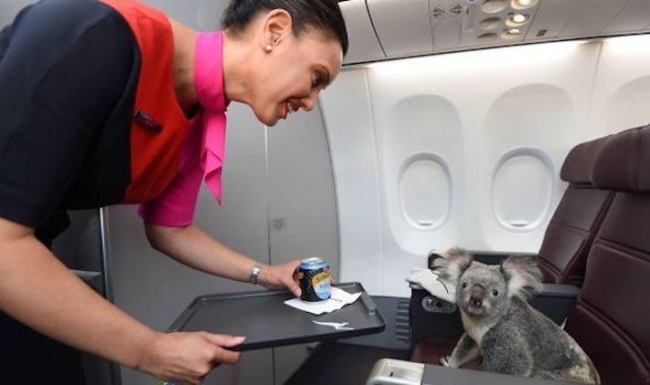 pes, v letadle, letadlo, pes, do letadla, cestování, se psem, zvířata, v letadle, cestovní společnosti, obrázky, psů 13