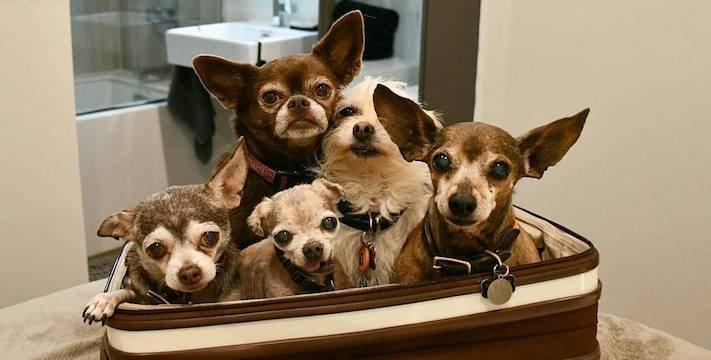 starý pes, starší pes, důchod, u psa, věk, stáří, adopce, proč adoptovat, psa, adoptování, pes, z útulku, diskuze, příběhy, psí, psí příběhy 2