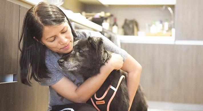 starý pes, starší pes, důchod, u psa, věk, stáří, adopce, proč adoptovat, psa, adoptování, pes, z útulku, diskuze, příběhy, psí, psí příběhy 3