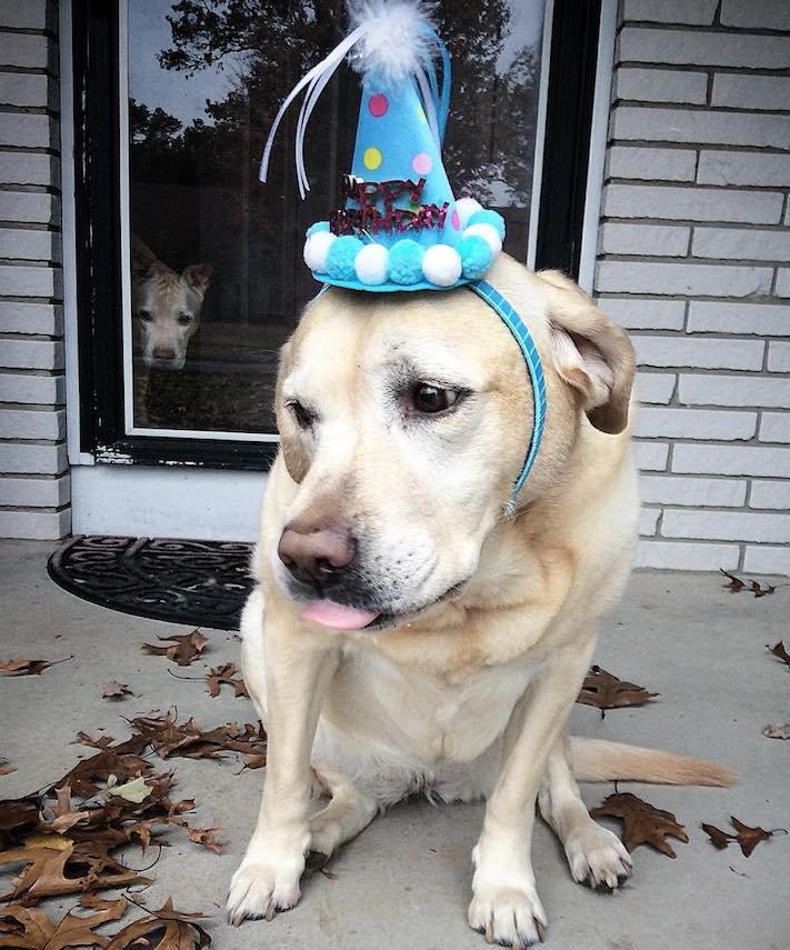 starý pes, starší pes, důchod, u psa, věk, stáří, adopce, proč adoptovat, psa, adoptování, pes, z útulku, diskuze, příběhy, psí, psí příběhy 4