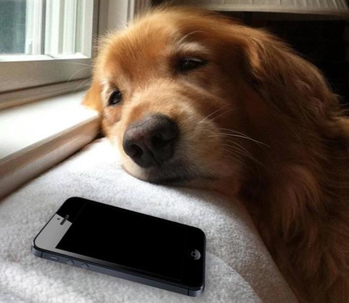 pes, čeká, na majitele, psí, věrnost, psí věrnost, věrnost psa, psů, shledání, psa, majitele, po dlouhé době, dlouhá doba 1
