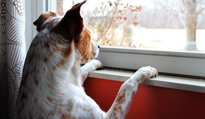 pes, čeká, na majitele, psí, věrnost, psí věrnost, věrnost psa, psů, shledání, psa, majitele, po dlouhé době, dlouhá doba 2