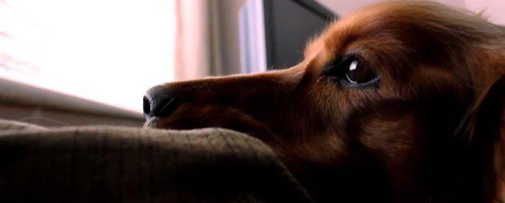 pes, čeká, na majitele, psí, věrnost, psí věrnost, věrnost psa, psů, shledání, psa, majitele, po dlouhé době, dlouhá doba 3