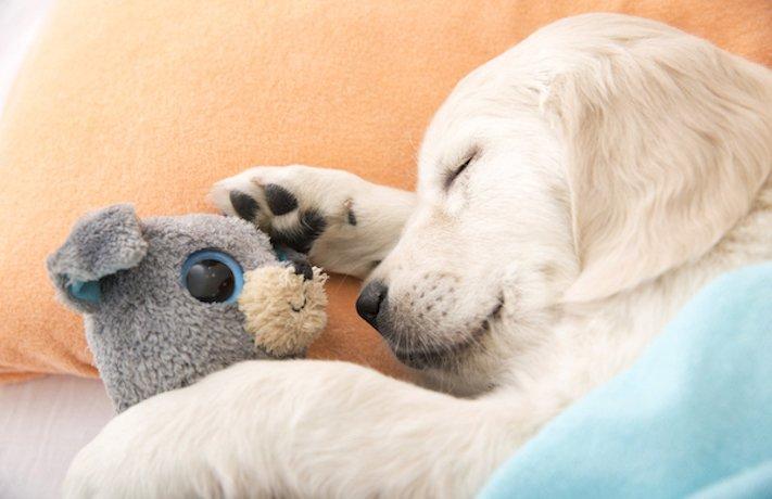výcvik, psa, štěněte, jak, kdy, cvičit, vychovávat, štěně, začátek, první kroky, výcviku, výcvik 4